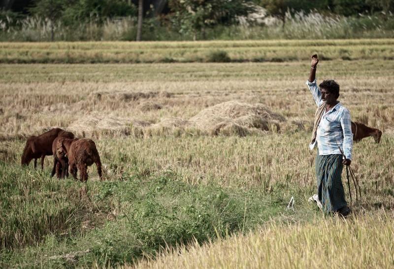 農場で働く男性